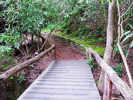 Bridge across the creek by Cathy Harper