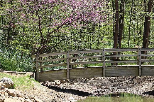 Bridge at the Arboretum by Vikki Angel