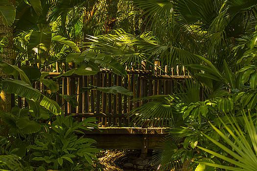 Bridge in Asian forest by Tito Santiago