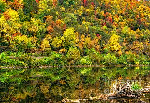 Nick Zelinsky - Bright Autumn Colors
