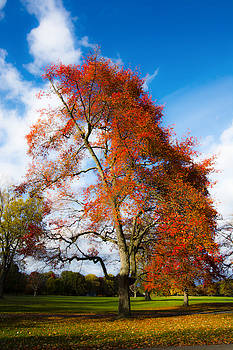 Bright Fall Colors by Tracy Winter