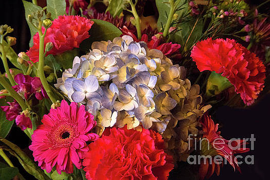 Bright Floral by Linda Phelps