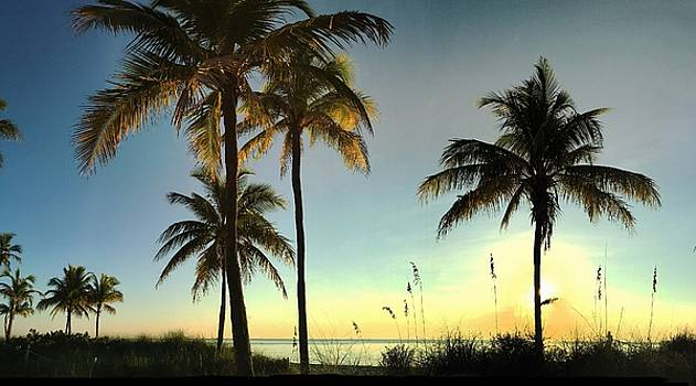 Bright Sunshine Greets The Palms by Andrew Royston