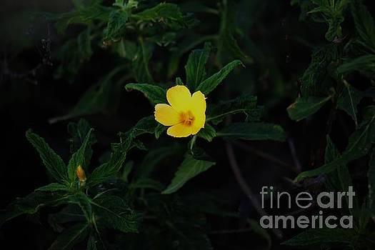 Bright Yellow Blossom by Craig Wood