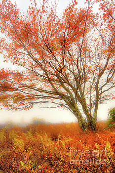 Brilliant Orange Autumn Fall Colors Tree by Dan Carmichael