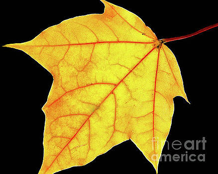 Brilliant Yellow Nature Photograph by Melissa Fague
