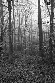 Brisk Foggy Morning by Regina  Williams