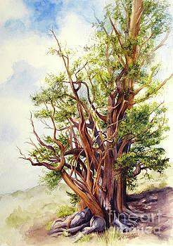 Bristle Cone Pine by Bonnie Rinier