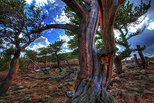 Bristlecone Fantasy by Mike Flynn