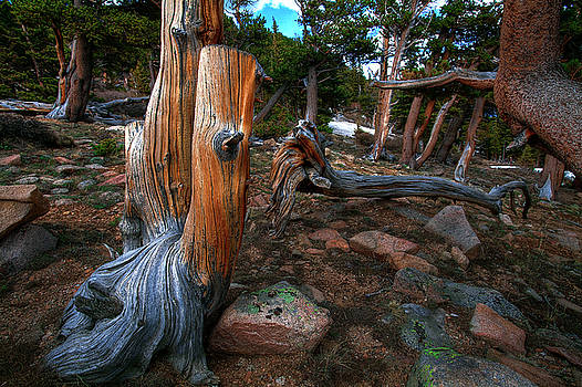 Bristlecone by Mike Flynn