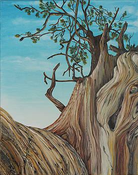 Bristlecone Pine 2 by Alexandra  Kube