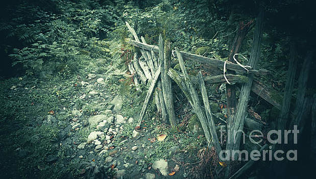 Svetlana Sewell - Broken Fence