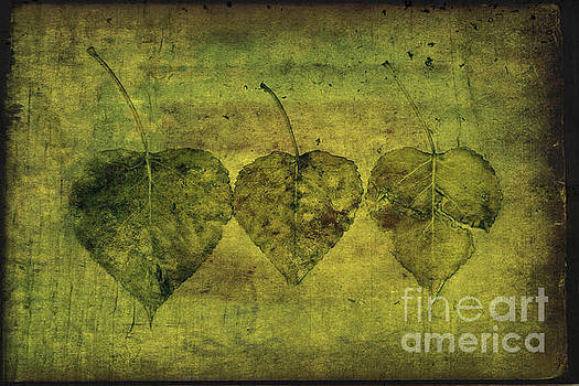 Broken Hearted Fossilsx3 by Lori Frostad