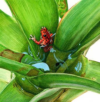 Bromeliad Microhabitat by Logan Parsons