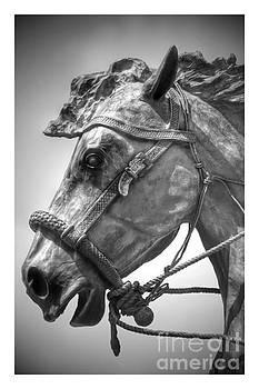 Bronze Head by Carole Martinez