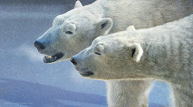 Brothers On Ice Polar Bears by R christopher Vest