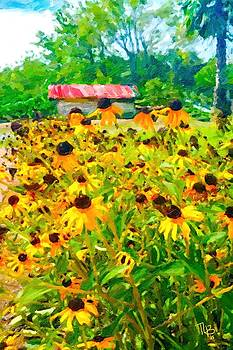 Brown Eyed Susans at Laura Plantation by Tammy Lee Bradley