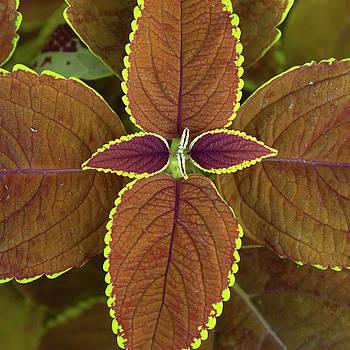 Brown Leaves by Catherine Lau
