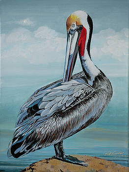Brown Pelican by Bill Dunkley