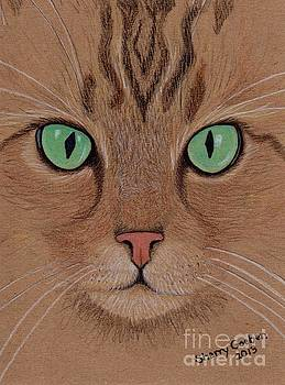 Brown Tabby -- What a Looker by Sherry Goeben