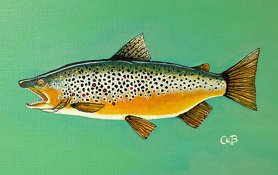 Brown Trout by Chad Berglund