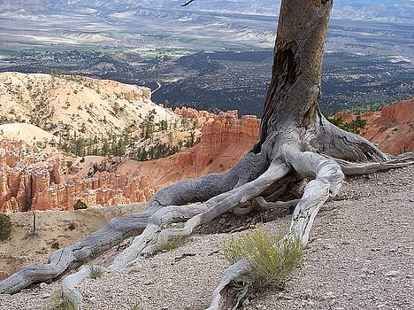 Bryce Canyon by Celene Terry
