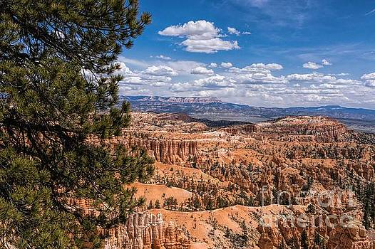 Bryce Canyon by Peggy J Hughes