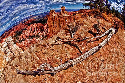 Bryce Drought Tree by Blake Richards