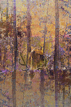 Buck Deer In Camouflage by Suzanne Powers