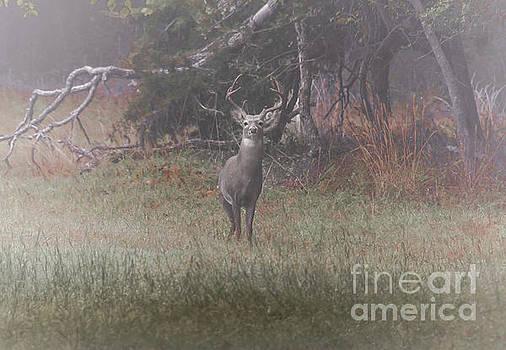 Buck In Foggy Bottoms by Robert Frederick