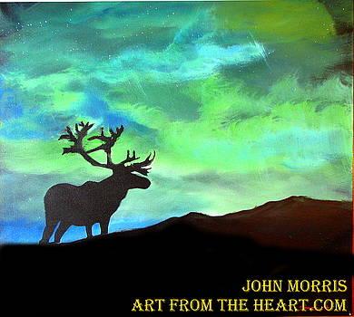 Buck in the Northen lights by John Morris