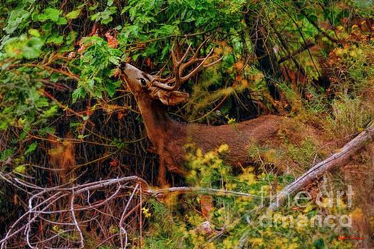 Buck Strech by Blake Richards