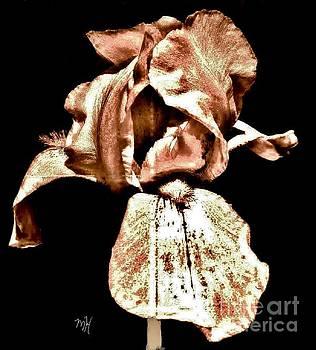 Buckskin Iris by Marsha Heiken