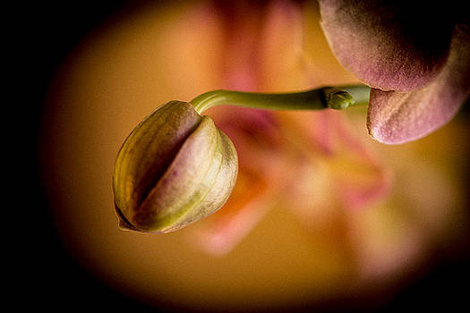 Bud In Bloom by Sheree Lauth