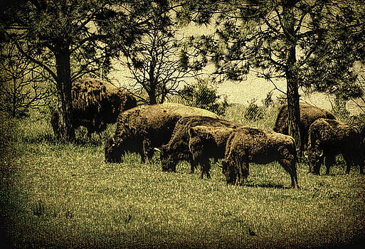 Buffalo Herd by Diane Schuster