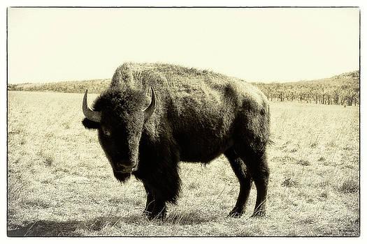 TONY GRIDER - Buffalo in Sepia