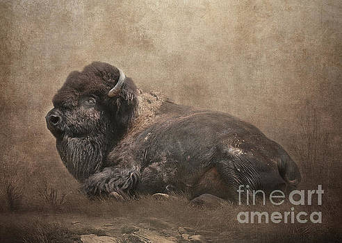 Buffalo by Lynn Jackson