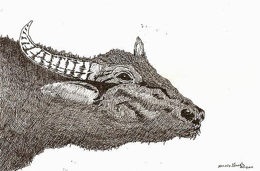 Buffalo  by Umesh U V