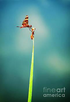 Bug Olympics XVII by Charles Dobbs