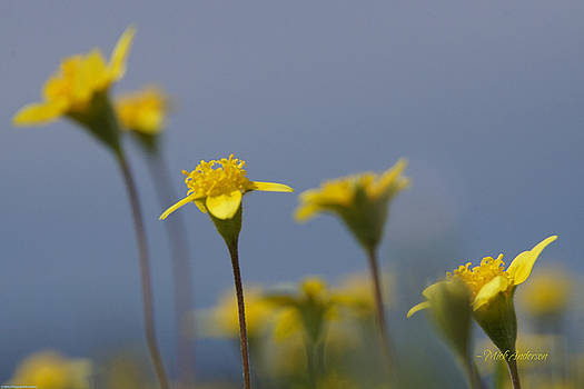 Mick Anderson - Bugs Eye View Of A Wildflower