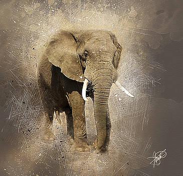 Bull Elephant by Tom Schmidt