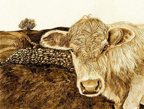 Bull In Field by Cate McCauley