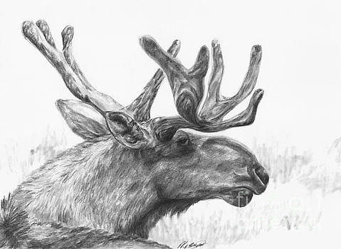 Bull moose study by Meagan  Visser