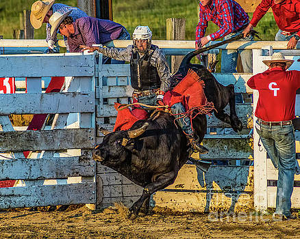 Bull Riding at Cowtown by Nick Zelinsky