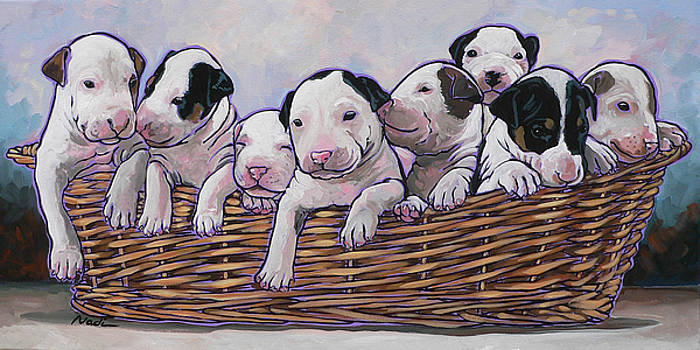 Bull Terrier Pups by Nadi Spencer