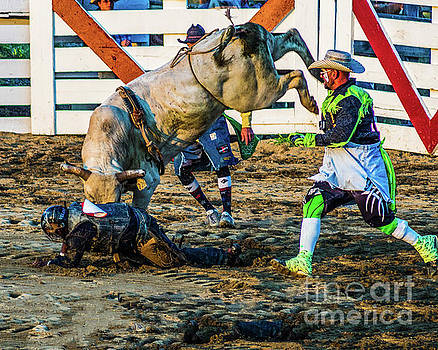 Bullfighter to the Rescue by Nick Zelinsky