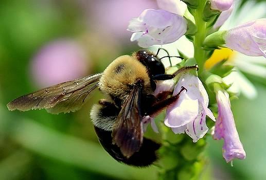 Rosanne Jordan - Bumble Bee