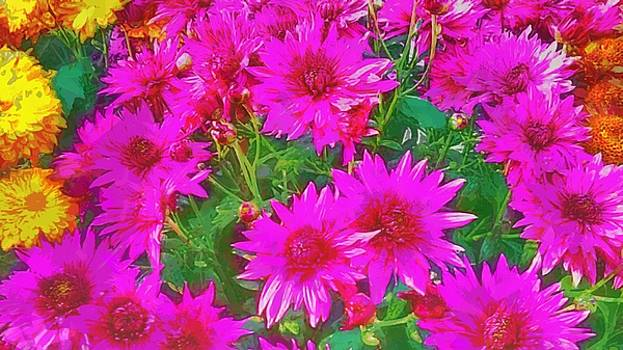 Bunch of pink and yellow flowers by Ashish Agarwal