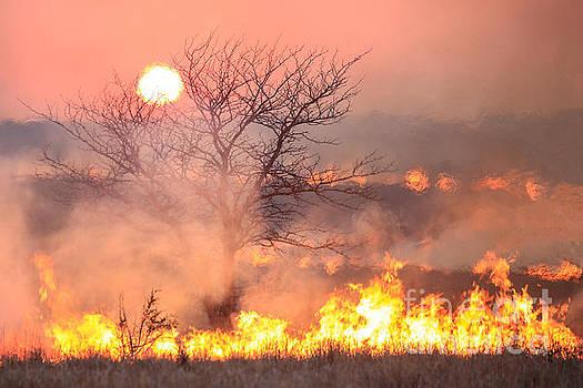Burning Fields by Lynn Sprowl