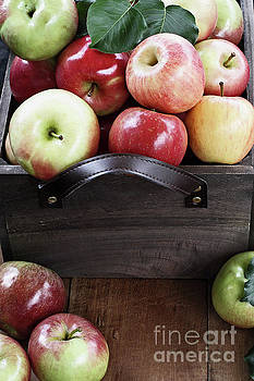 Bushel of Apples  by Stephanie Frey